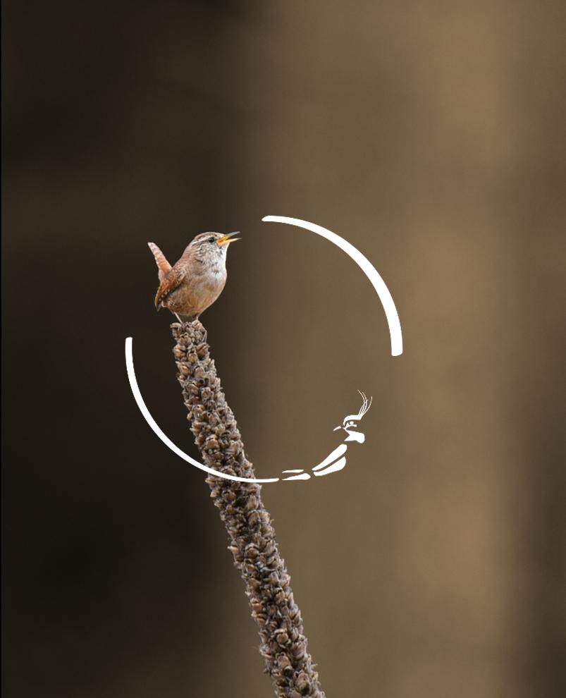 Automatinės paukščių atpažinimo technologijos