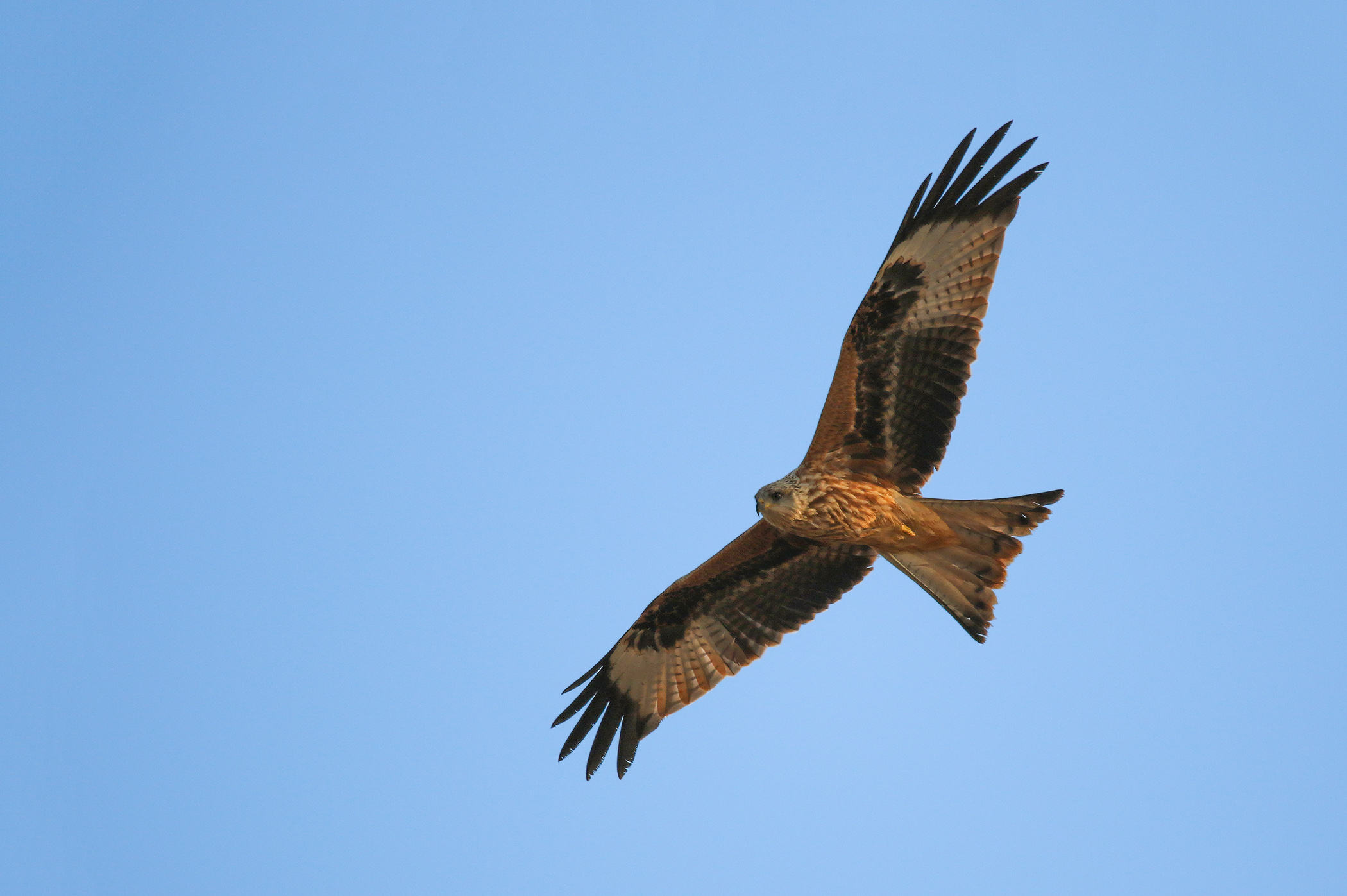 Turo apžvalga: penkios ryškiausios akimirkos iš paukščių rojaus Nemuno deltos